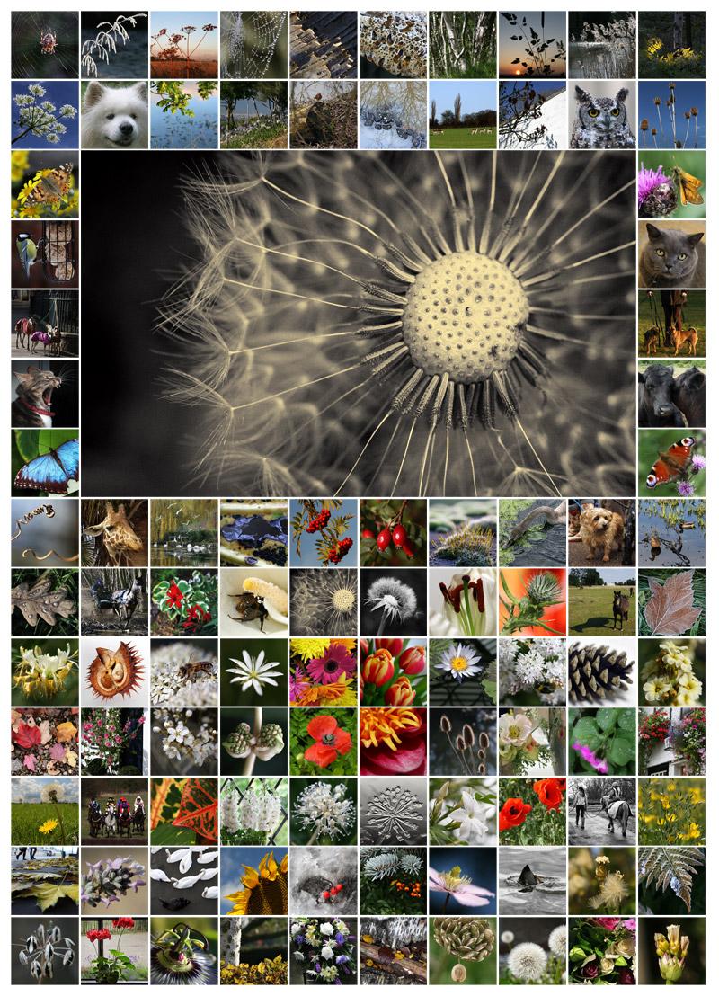 100 Days - Flora & Fauna